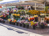 Nice, France, on July 3, 2011. Trade in flowers in the city market — Stock Photo