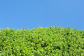 Tree branches on blue sky. tree on green meadow on blue sky background. natural background with copy space. (2) — ストック写真