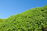 Tree branches on blue sky. tree on green meadow on blue sky background. natural background with copy space. — ストック写真