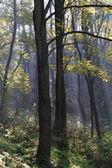Parc automne — Photo