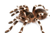 Beautiful spider — Stock Photo