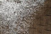 雪 — ストック写真