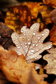 Fallen leaves covered with raindrops — Stock Photo