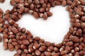 Hazelnut close up — Stock Photo