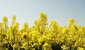 Kolorowe pola — Zdjęcie stockowe