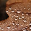 Fallen leaves covered with raindrops — Photo