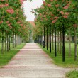 Chestnut tree along the pathway — Stock Photo