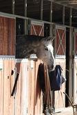 Portret konia — Zdjęcie stockowe