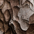 Wooden texture. Macro pine tree — Stock Photo #30174039