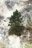 石灰岩の岩壁 — ストック写真