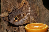 Macro photograph of a butterfly — Stockfoto