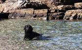 Dog in the cool sea — Stock Photo