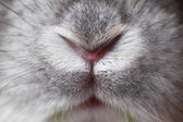 Rabbit mouth and nose — Stock Photo