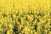 Colourful field — Stock Photo
