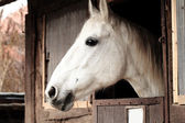 Pferd portrait — Stockfoto