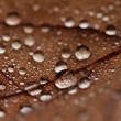 Fallen leaves covered with raindrops — Stock Photo #34368149