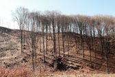 Logging — Stock Photo