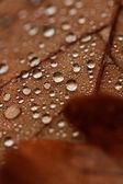 落ち葉が雨の雫で — ストック写真