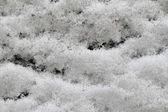 Snow surface — Stockfoto