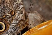 Макро фотография бабочки — Стоковое фото