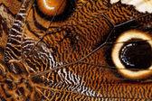 蝶の翅のマクロ写真 — ストック写真