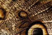 Macro photograph of a butterfly wing — Stock Photo
