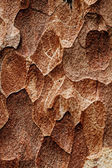 Wooden texture. Macro pine tree — Stock Photo