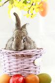 Gray rabbit — Stock Photo