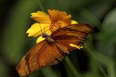 Oranje vlinder — Stockfoto