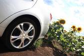 Carro novo no campo — Fotografia Stock