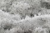 雪面 — 图库照片