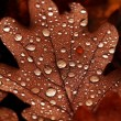 Fallen leaves covered with raindrops — Stock Photo #39772521
