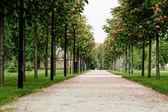 Chestnut tree along the pathway — Stock Photo