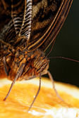 Macro photograph of a butterfly — Stock Photo