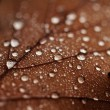 Fallen leaves covered with raindrops — Stock Photo #40135917