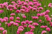 Pink flower — Stock Photo
