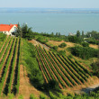 Badacsony - Balaton — Stock Photo
