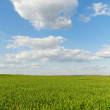 Countryside in spring — Stock Photo #48305397