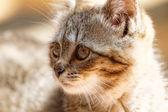Küçük kedi — Stok fotoğraf