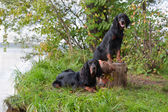 Two gun dog near to trophy, outdoors — Stock Photo