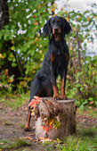 Gun dog near to trophy, outdoors — Stock Photo