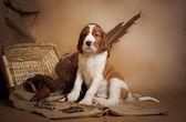 Puppy and pheasant — Fotografia Stock