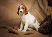 Puppy and hunting accessories — Stock Photo