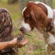 Dog sniff snipe in hands — Stock Photo #39858245