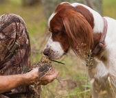 Dog sniff snipe in the hands — Stock Photo