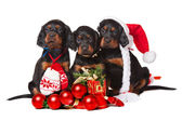 Three serrers puppies over white, xmas — Stock Photo