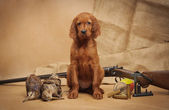 Perrito y accesorios de caza — Foto de Stock