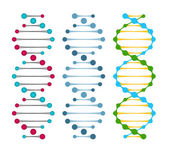 Three variants of double strand DNA molecules — Stock Vector
