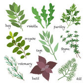Vector herbs — Stock Vector