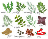 Vector herbs and spices — Stock Vector